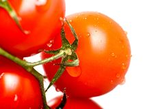 Tomatoes Freshness. Fresh Vegetables - Tomatoes Isolated on White. Fresh Tomato in Water Stock Photo
