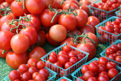 Tomatoes Galore Royalty Free Stock Photography