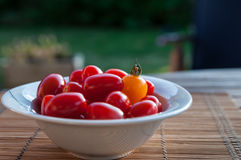 Tomatoes on a garden table Royalty Free Stock Photography