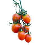Tomatoes in the garden,Vegetable garden Royalty Free Stock Image