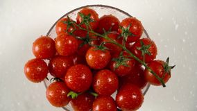 Tomatoes in a glass bowl stock video footage