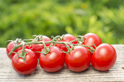 Tomatoes on a green background Royalty Free Stock Image