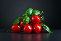 Tomatoes with green basil Royalty Free Stock Images