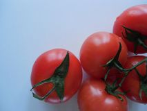 Tomatoes with green branches close-up royalty free stock images