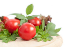 Tomatoes and green parsley Stock Image
