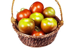 Tomatoes green and red Stock Photography