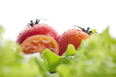 Tomatoes and green salad Royalty Free Stock Images
