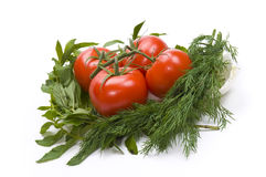 Tomatoes and greens Royalty Free Stock Photography