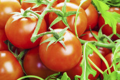Tomatoes with greens Royalty Free Stock Photos