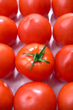 Tomatoes group. Display of a group of market fresh tomatoes with odd one out Royalty Free Stock Photography