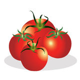 Tomatoes group  illustration. Stock Photography