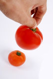 Tomatoes  hand. Two red tomatoes in hand isolated on white Stock Photography