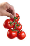 Tomatoes in hand Royalty Free Stock Photography