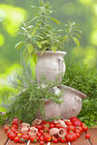 Tomatoes and herbs in amphora Royalty Free Stock Photography