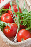 Tomatoes and herbs in a basket. Fresh picked produce: tomatoes, scallions, basil, and lettuce rest in a woven basket Stock Photo