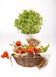 Tomatoes in wooden basket and herbs in flower pot Stock Photography