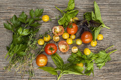 Tomatoes and herbs Stock Images