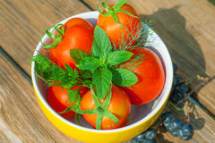 Tomatoes with herbs on the plate Royalty Free Stock Images