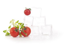 Tomatoes with ice Royalty Free Stock Photos