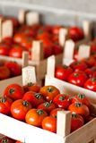 Tomatoes In Harvest Box Stock Photos