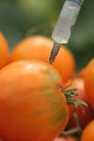 Tomatoes injection Stock Photo
