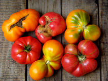 Tomatoes irregular shape of different varieties and colors on wooden background. Selective focus Stock Photos