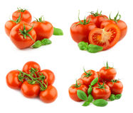 Tomatoes isolated Royalty Free Stock Image