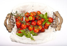 Tomatoes isolated Stock Photography