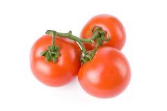 Free Tomatoes Isolated On White Stock Photos - 6853433