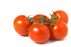 Tomatoes isolated on white background Royalty Free Stock Image