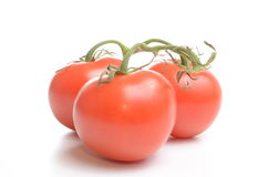 Tomatoes isolated on white. Background Royalty Free Stock Image