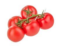 Tomatoes isolated on white Royalty Free Stock Image