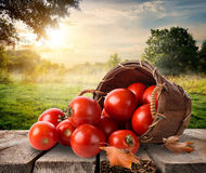 Tomatoes and landscape Royalty Free Stock Photo
