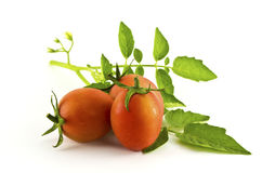 Tomatoes and leafs  Stock Images