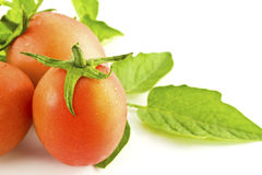 Tomatoes and leafs  Stock Image