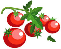 Tomatoes with leaves. Illustration of simplistic tomatoes with leaves and vine isolated on white Royalty Free Stock Photo