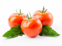 Tomatoes with leaves Royalty Free Stock Images