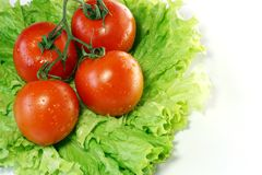 Tomatoes on leaves of salad. Isolated on a white background Royalty Free Stock Photography
