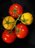 Tomatoes and lemons on the same branch Stock Photography