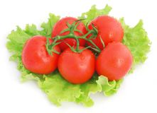Tomatoes and lettuce Royalty Free Stock Photo