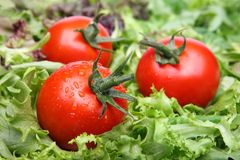 Tomatoes on lettuce Royalty Free Stock Images