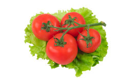 Tomatoes on lettuce leaf. The ripest tomatoes from a farm Stock Image