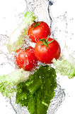 Tomatoes and lettuce in splash water Royalty Free Stock Photography