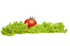 Tomatoes and lettuce on white. Tomatoes and lettuce on the white background royalty free stock image
