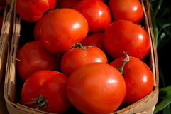 Tomatoes at local farmers' market. Royalty Free Stock Image