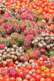Tomatoes, longans and rambutans. Fresh mixed fruits from the farmland Stock Image