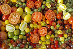 Tomatoes Lycopersicon Royalty Free Stock Photos