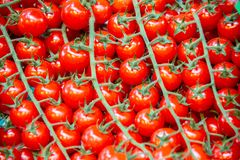 The tomatoes at the market display stall. Tomatoes at the market display stall royalty free stock images