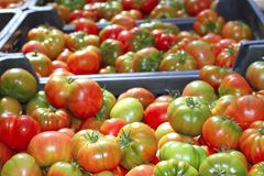 Tomatoes in market raff tomato vegetable Stock Images