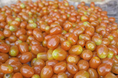 Tomatoes of north Royalty Free Stock Photo